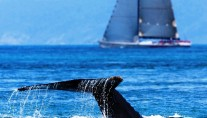 The South Pacific Tonga is well known for whale watching
