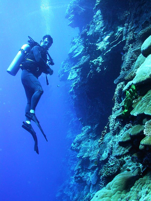 A diver explores the vertical distribution of corals on a Pacific wall - Image courtesy of  Deb Gochfeld