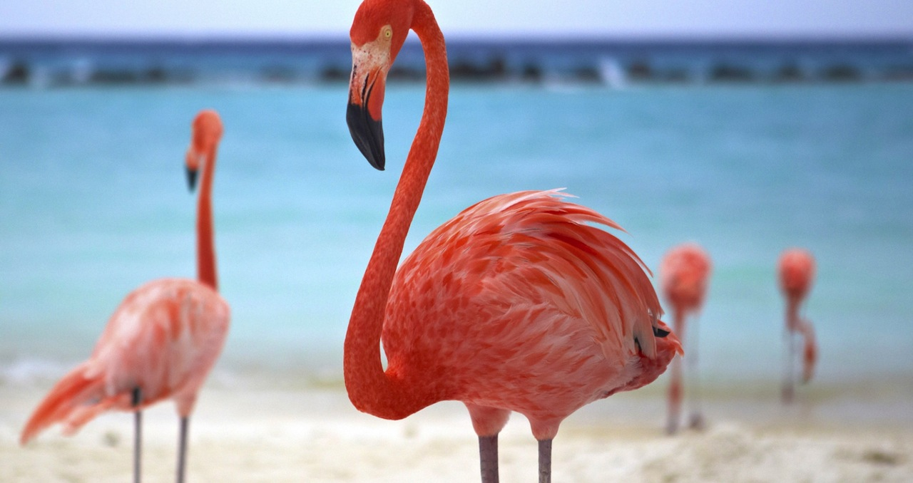 Aruba - © 2015 Aruba Tourism Authority