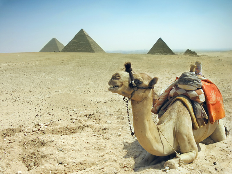 Camel Rides In Giza - Photo  credit to Egypt Tourism Board