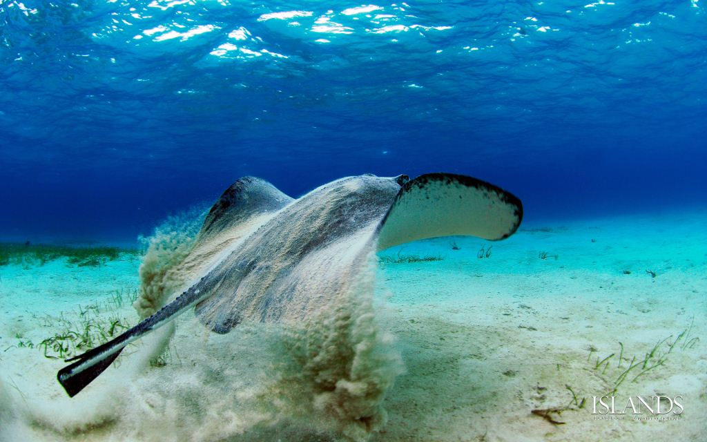 Stingray encounter in the Cayman Islands  - Credit Ty Sawyer