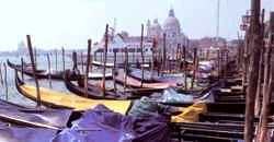 Sailing charter venice florida