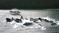 ALASKAN STORY whale watching