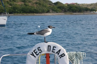 Sailing Catamaran - Yes Dear - Wildlife