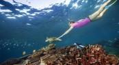 Lady Elliot Island turtle & snorkeller
