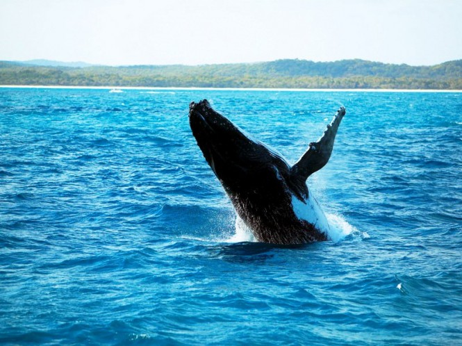Whale watching on the Fraser Coast