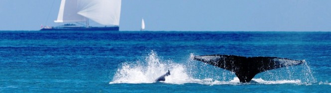 Whale and Kokomo Sailing Yacht - Hamilton Island Race Week Australia