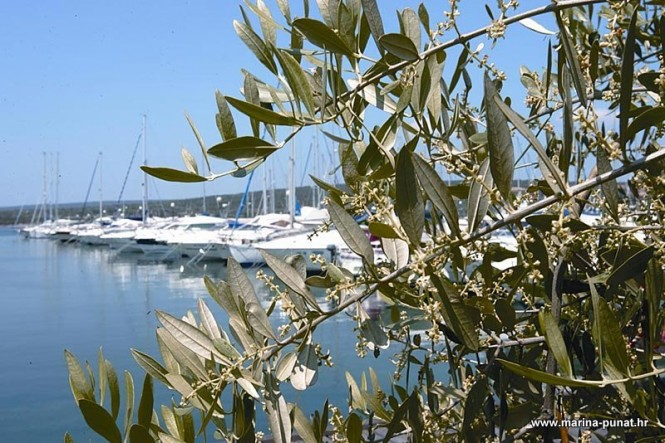 Punat Marina - the oldest superyacht marina in Croatia