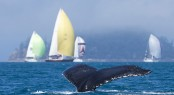 A whale and cruising fleet at AHIRW 2012 - Photo credit: Andrea Francolini/Audi