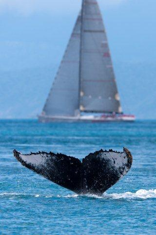 A whale of a welcome at Audi Hamilton Island Race Week 2012