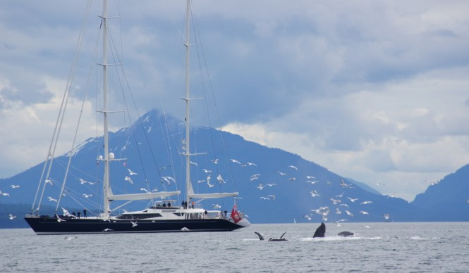 Dubois designed 174ft superyacht Drumbeat in Juneau, Alaska with feeding whales