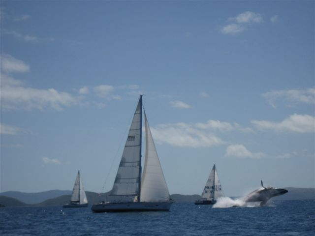 Whale Leap - Audi Hamilton Island Race Week