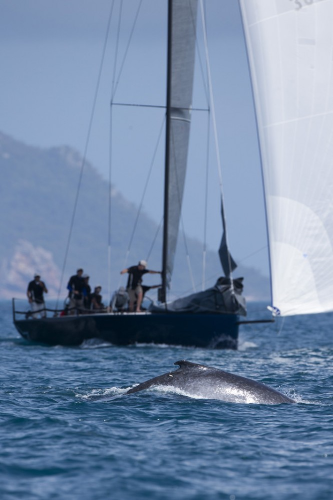 Whale and Dark Star yacht - Photo Credit: Andrea Francolini/Audi