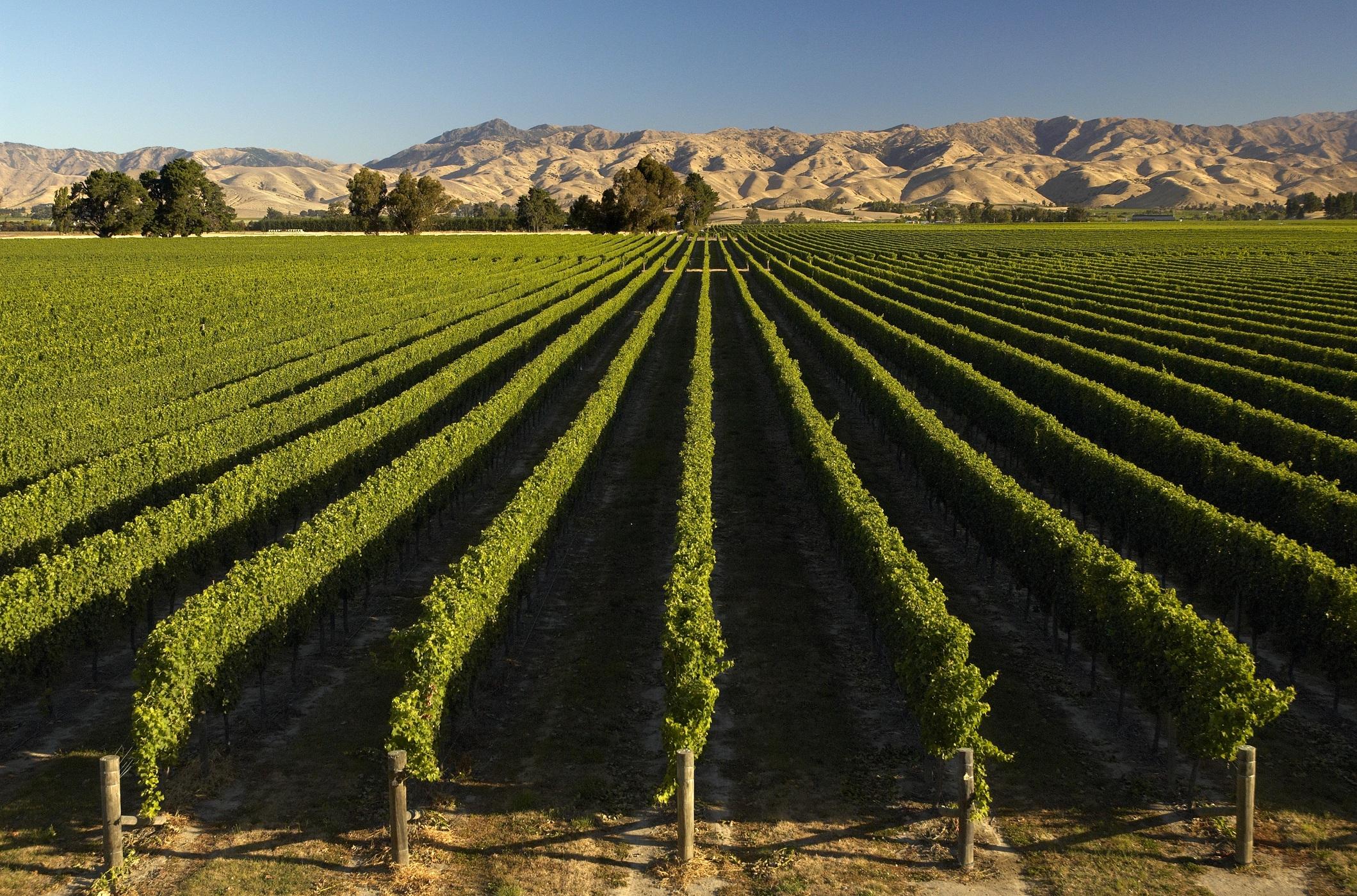 Marlborough vineyard yacht charter superyacht news for Landscape jobs nz