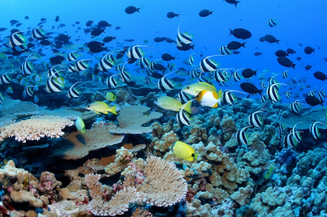 Underwater Wonders of the Caribbean