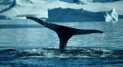 UltraYachts assisting to discover a fabulous yacht charter destination - Antarctica