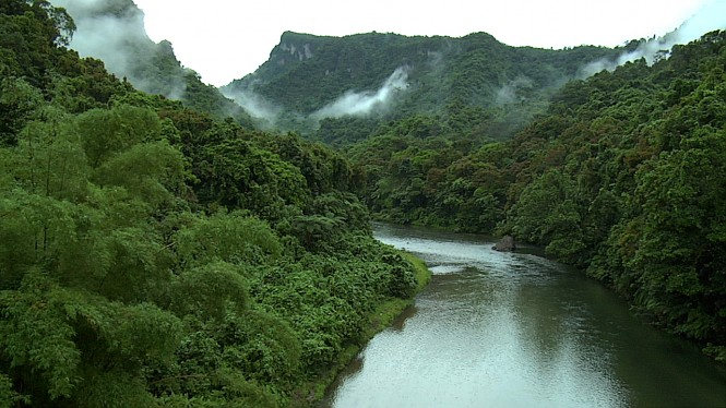 Fiji rainforests