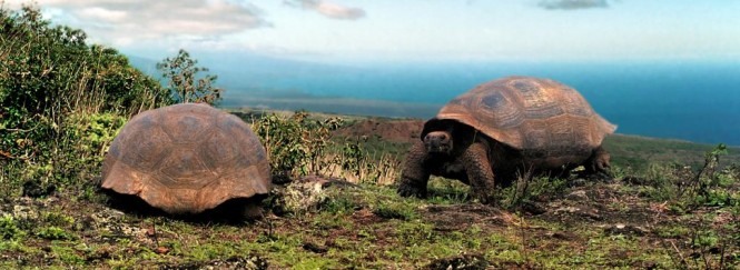The Giant Tortoise in the Galapagos Islands