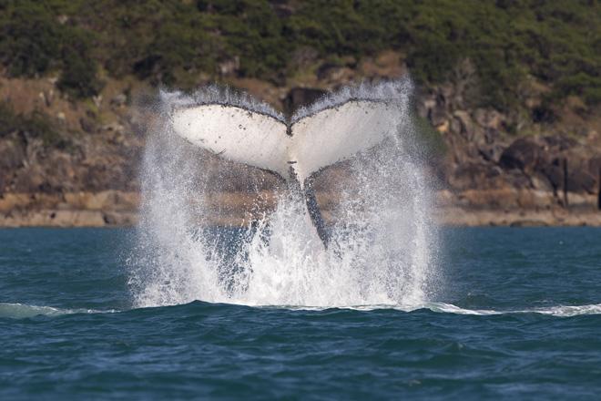 AHIRW2013 - whale tail - credit Andrea Francolini_Audi