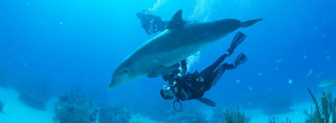 Diving in The Bahamas - Copyright © The Islands Of The Bahamas