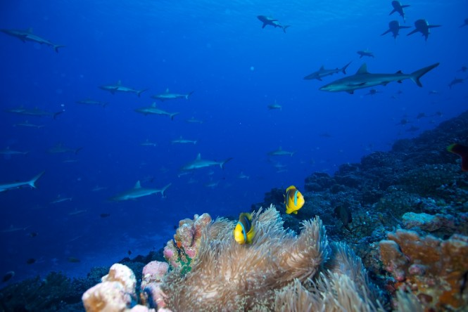 Diving in Fiji - Photo credit Rodolphe Holler / Superyacht Private Expeditions