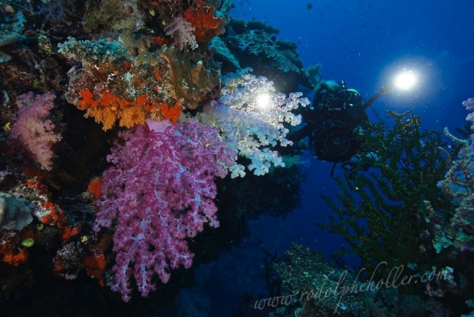 Underwater world in Fiji - Photo credit Rodolphe Holler / Superyacht Private Expeditions
