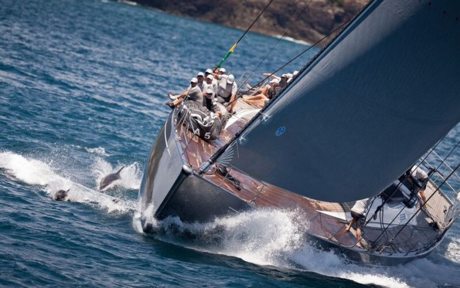 Dolphins race alongside Silvertip at the 2015 edition of the NZ Millennium Cup. Image by Jeff Brown