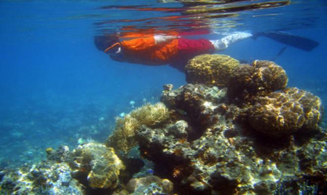 Underwater life in Haiti