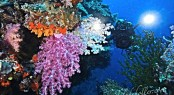 Diving in Fiji - Image credit to Superyacht Private Expeditions