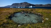 The Uunartoq hot springs is a favourite with locals and visitors.