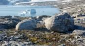 Greenland_bay