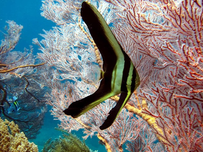 Diving in Amed, Bali