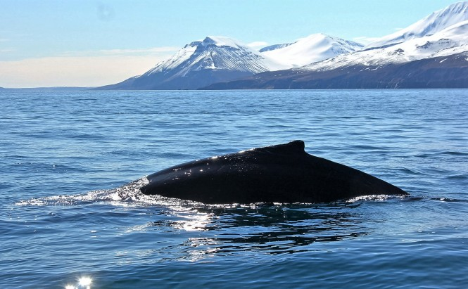 husavik-whale-watching-north