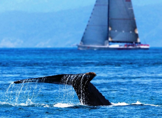 New Zealand is known for sailing and whales