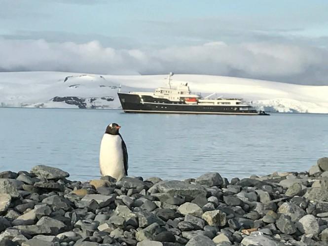 Motor yacht Legend Antarctica penguin