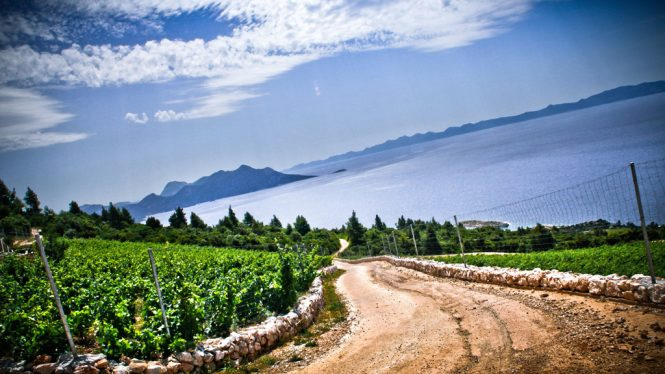 View from the Vinery Saints Hills in Croatia