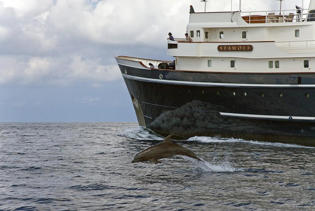 Detail Profile Aspect Aboard Yacht SEAWOLF