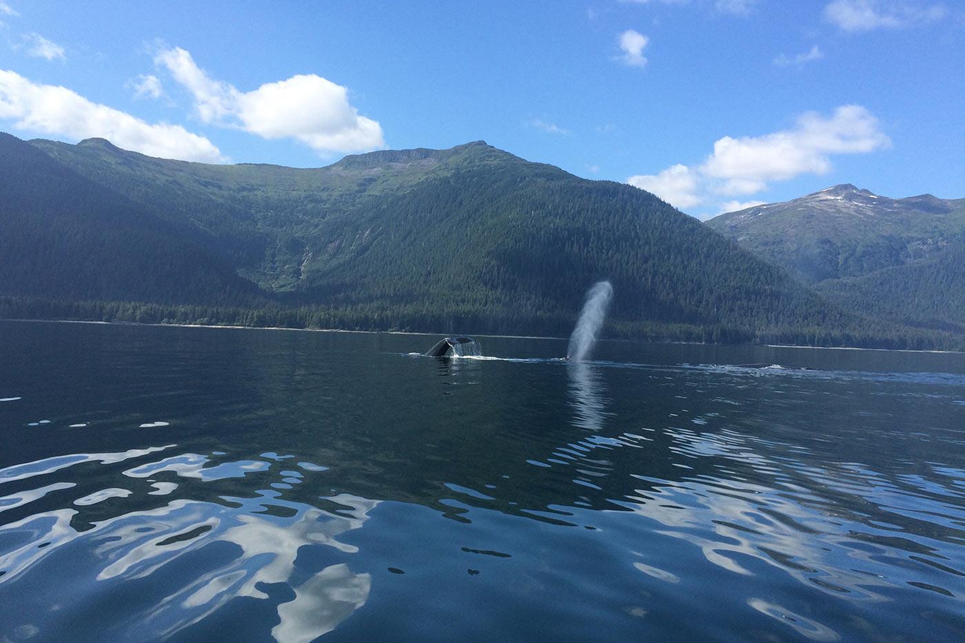 Yacht Charter Vacation In Alaska