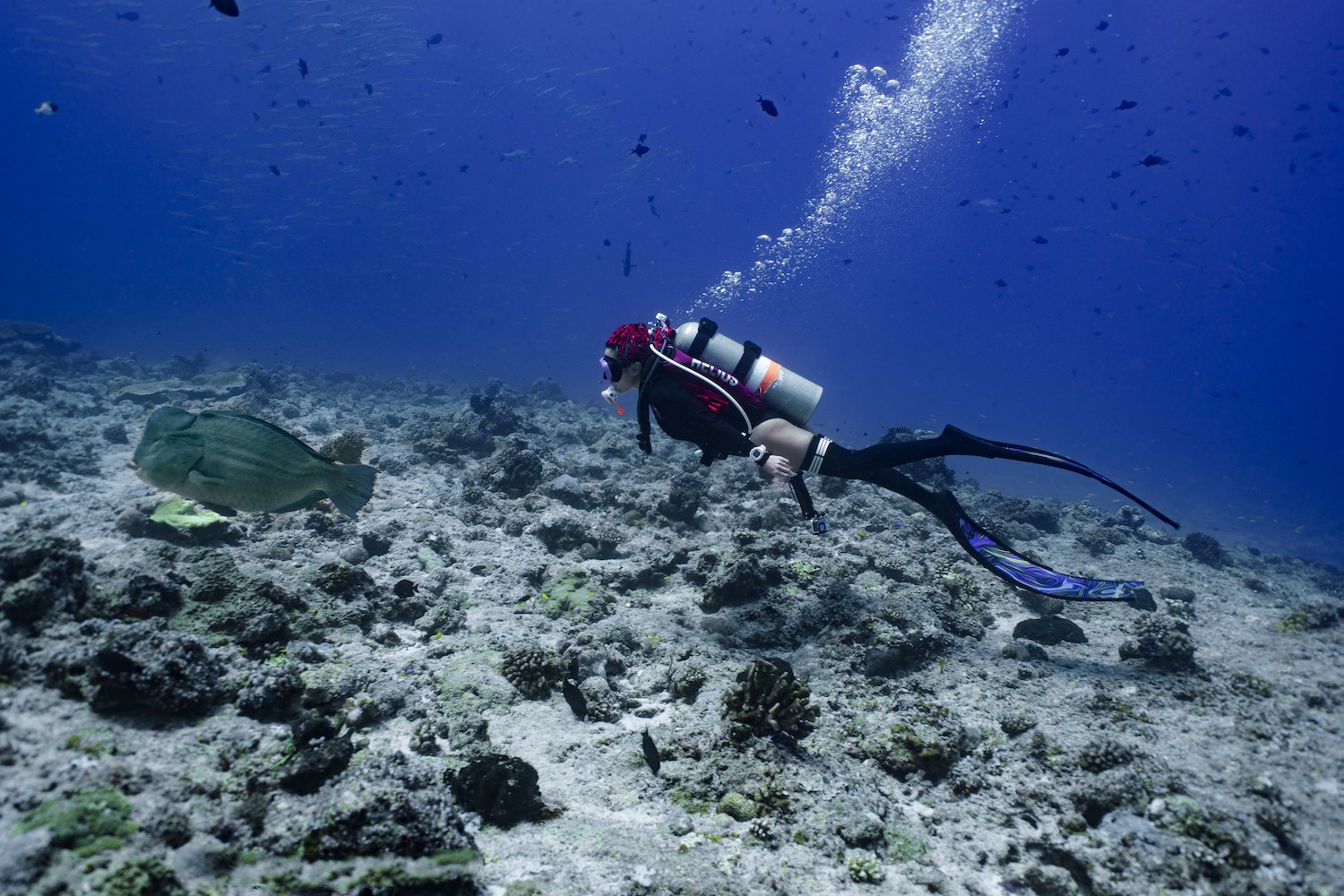 Diving In Palau With Motor Yacht BLACK PEARL I