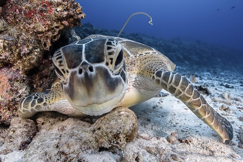 Wildlife In Palau