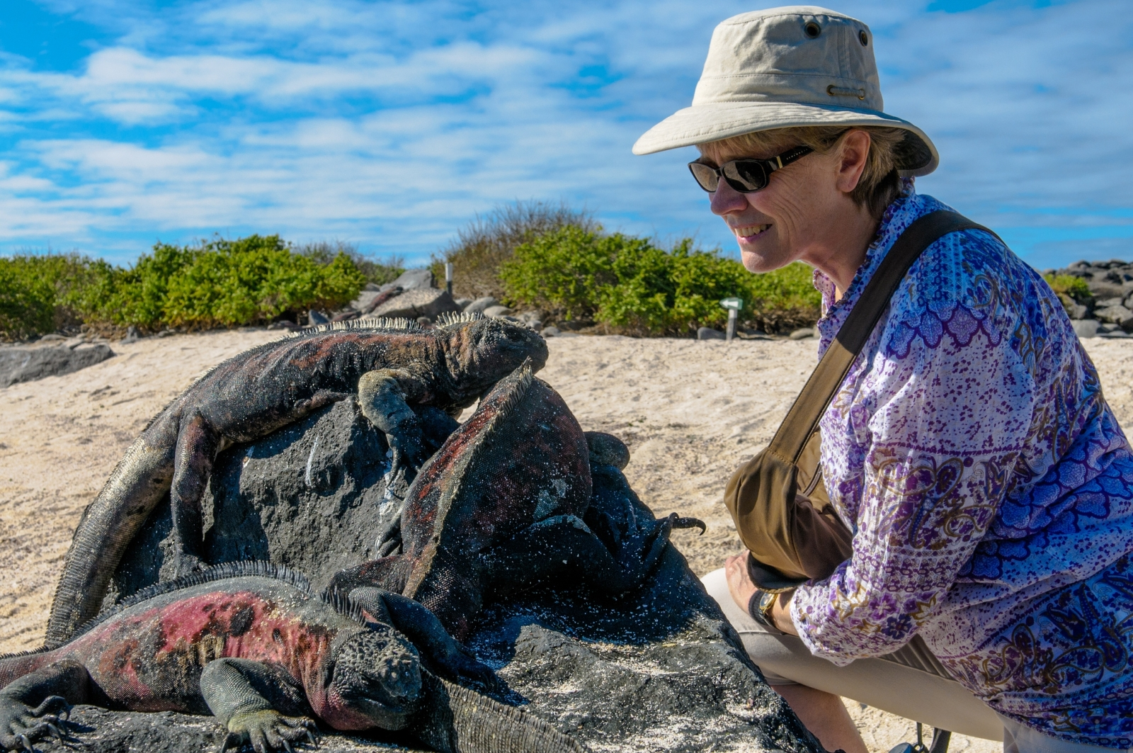 Galapagos Sea Star Journey Guest Meeting With Guana Lizards