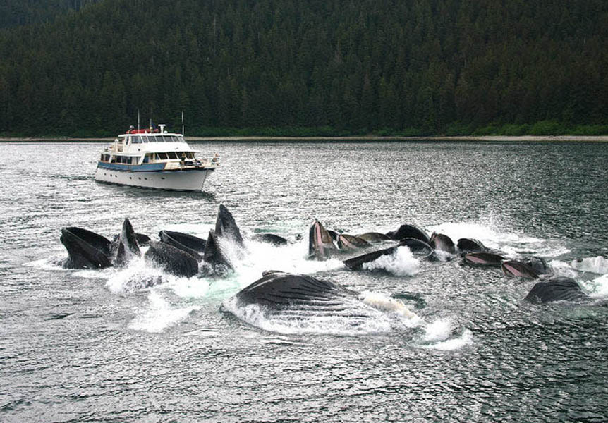 ALASKAN STORY whale watching