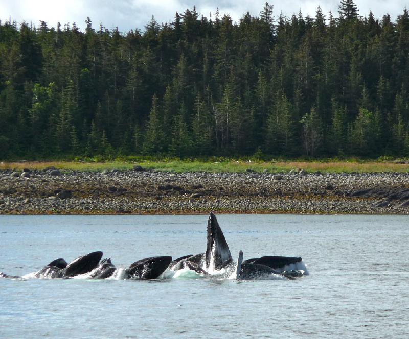 Motor yacht VIAGGIO -  Whales Feeding