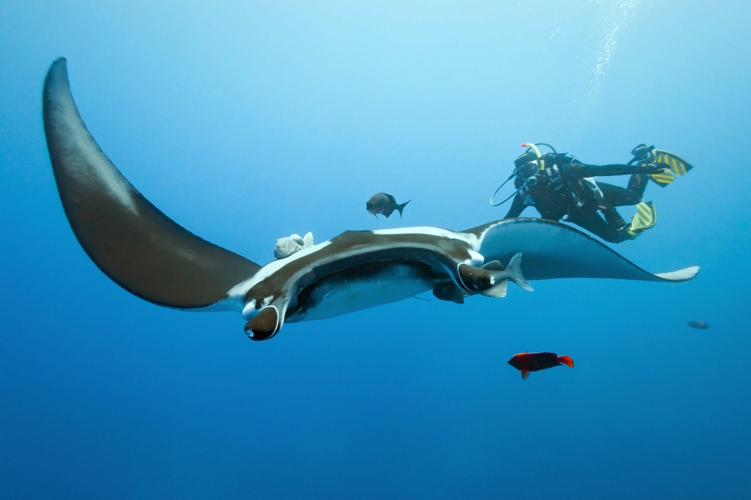 Nyaman - Diving at Manta Point