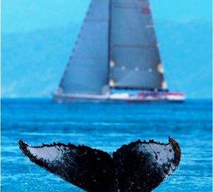 Audi Hamilton Island Race Week 2010 – Whale Photos.