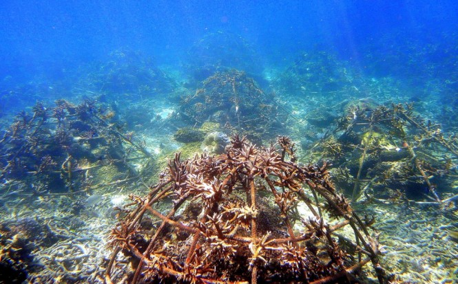 Artificial structures encourage reef ecosystem growth.