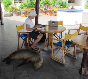 Oyster World Rally 2013: Stopover in the Galapagos
