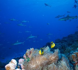 Diving in Fiji - Photo credit to Superyacht Private Expeditions