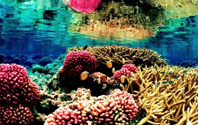 Great-Barrier-Reef-4 (2)