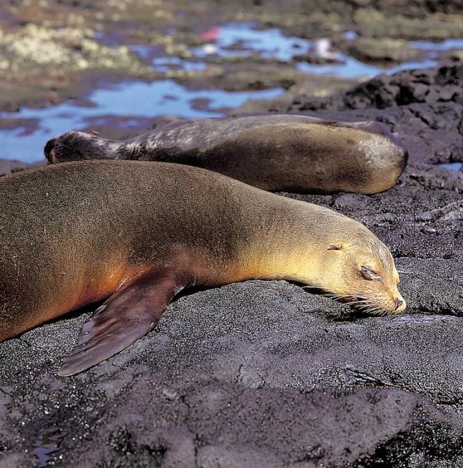 Two Sea Lions - Photo Weston Walker